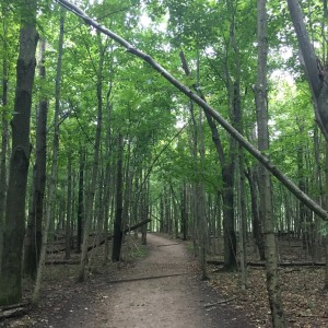 Lake Michigan wooded trail - square